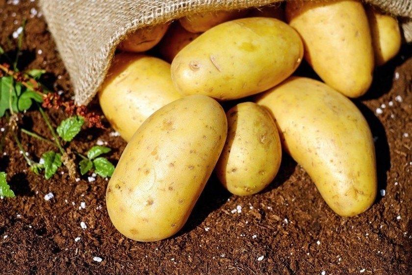 varné typy brambor