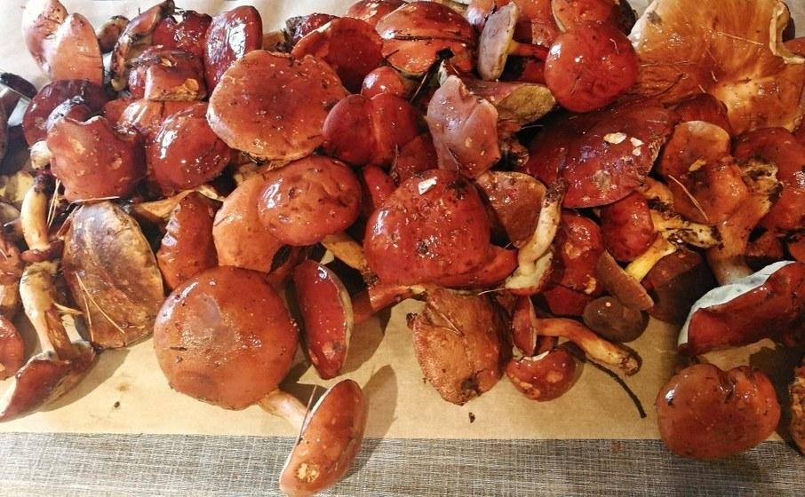 čerstvé lesní houby recepty