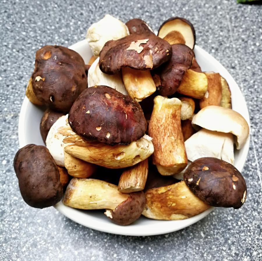 lesní houby na polévku